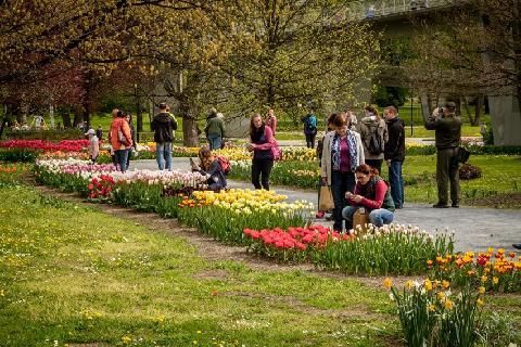 03302-Flora_Smetanovy_sady_Holandska_zahrada.jpg