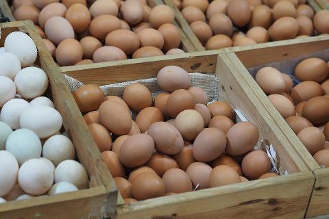 03686-egg-1131157_960_720.jpg